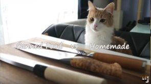 Sushi for cats