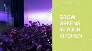 Farm In Your Kitchen | Look Inside (360 Video)