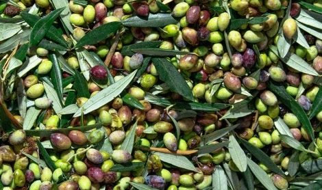 Reusing Olive Waste   Ask the Expert