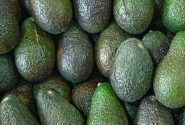Avocado: The Cost of Production
