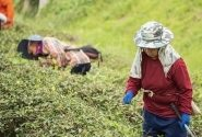 Will Agricultural Robots Replace Human Agricultural Labour? | Opinion