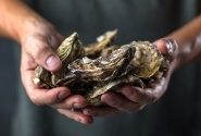 Toxicity in Shellfish | What is Shellfish Poisoning?