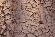 Water Scarcity | 6 Ways To Reduce Water Consumption in Agriculture