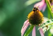 Pollination | How It Works