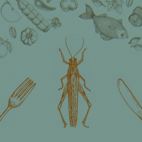 Edible Insects | Ask the Expert