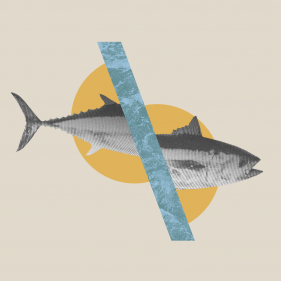 Unsustainable Fishing: The Situation in The Mediterranean