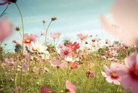 Edible Flowers & How To Grow Them