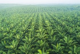 Problems With Palm Oil | Cost of Production