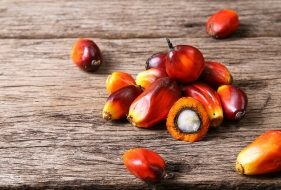 Palm Oil | How It's Made