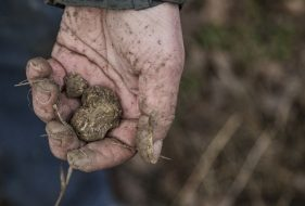 How Climate Change Affects Truffle Growth