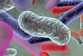 What Are Prebiotics | Foods and Supplements?