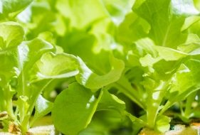 Vertical Farming | What's the Deal Anyway?